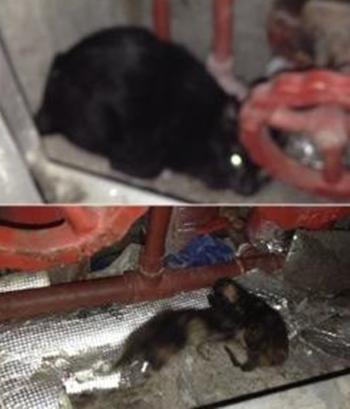 지난 2일 찾아간 서울 강남구 압구정동 A아파트 지하실엔 8마리의 고양이가 갇혀 있었다. 어린 고양이들은 아직 눈도 제대로 못 뜬 상태였다.