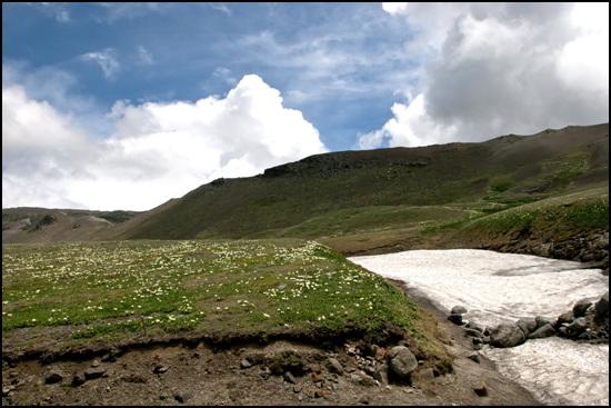 백두산은 봄과 겨울이 공존한다. 좌측은 꽃이 피어 있고 우측은 두터운 잔설이 남아 있다.