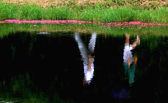 명옥헌 앞 연못을 지나가고 있는 연인의 반영 (2013-07-17 촬영)