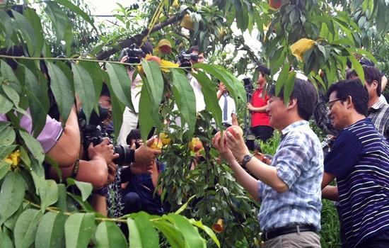 안철수 무소속 의원이 18일 찾은 전주시 완산구의 한 복숭아 농장에서 사진기자들의 요청에 따라 포즈를 취하고 있다.