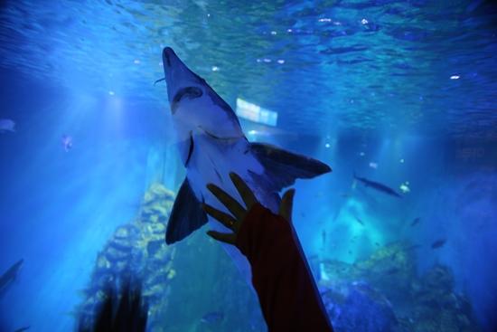 수조 아래 터널에서는 철갑상어가  손에 잡힐 듯 돌아다닌다.