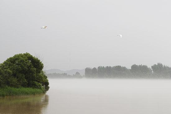 물안개로 덮인 의암호, 그 위를 날고 있는 백로 두 마리.