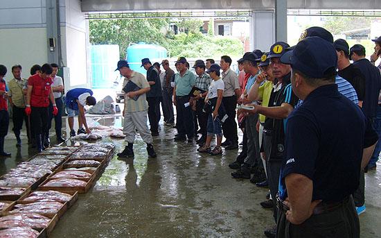 송도 위판장에서 민어를 경매하고 있는 중개인들.
