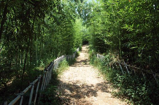 대숲길 장안사 뒤편으로 나 있는 대숲길. 이 대숲을 걸으며 깨달음의 의미를 느껴 볼 수 있으리라.