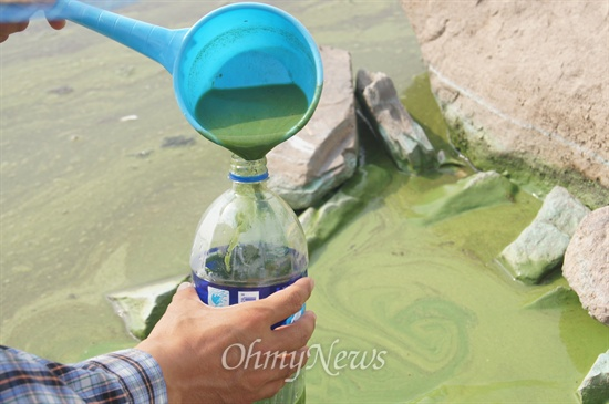 대구환경운동연합 정수근 생태보존국장이 낙동강 화원유원지 부근에 있는 사문진교 아래에서 녹조가 뒤덮인 강물을 플라스틱 통에 담고 있다.