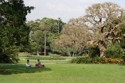 보타닉 정원에는 오래된 고목나무가 많다.