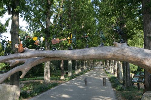 전남산림자원연구소의 메타세쿼이아 가로수 길. 느티나무 고목 위에 베짱이 오케스트라가 눈길을 끈다.