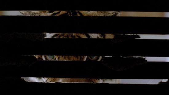 12일 개봉한 영화 <버닝 브라이트>의 한 장면 영화 안에서 공포의 실체로 활약한 식인 호랑이의 모습.