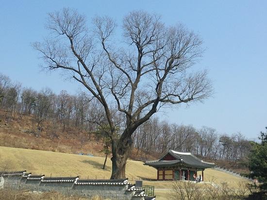 고려궁지의 뒷산을 강도(江都) 시절에는 송악산이라고 불렀다고 합니다. 개경의 고려 궁궐인 만월대는 송악산 아래 있다고 합니다.
