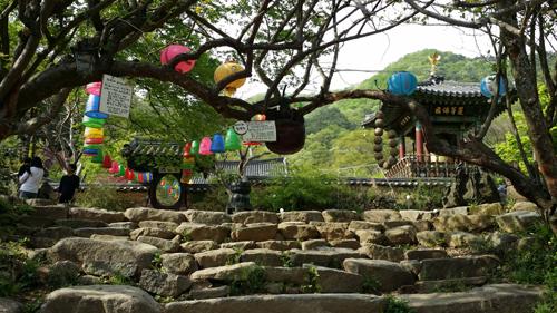 왕목탁을 매달고 있는 연인목. 사철나무 두 그루가 가지를 맞잡고 서 있다.
