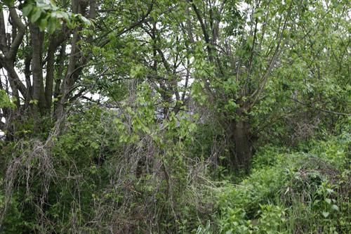 이소선이 살던 집터 박실마을, 지금은 흔적도 없이 잡초만 우거졌다