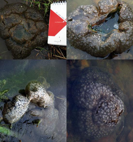 물 가장자리나 후미진 곳에 널리 퍼지고 있는 '큰빗이끼벌레'의 흉측한 모습 때문에 시민들이 발길을 돌리고 있다.