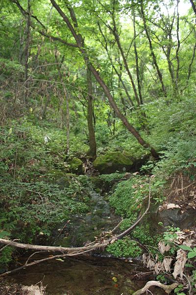 이끼 도롱뇽 서식처 서구청 사방댐공사 제외 지역의 이끼 도롱뇽 서식처 모습.