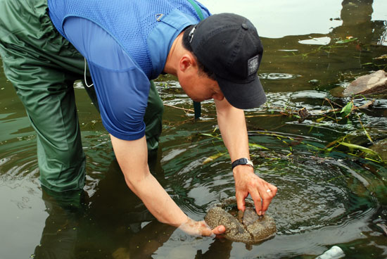 낙동강 남상교 인근 물가에서 대구환경운동연합 정수근 국장이 큰빗이끼벌레를 발견해 들어 보이고 있다.
