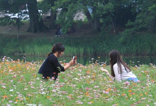 둔동마을 숲정이 앞 코스모스밭. 지난 12일 이곳을 찾은 여행객들이 휴대폰 카메라로 코스모스를 찍고 있다.