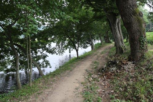 둔동마을 숲정이. 동복천변을 따라 고목이 줄지어 서 있다. 숲길이 호젓하다.