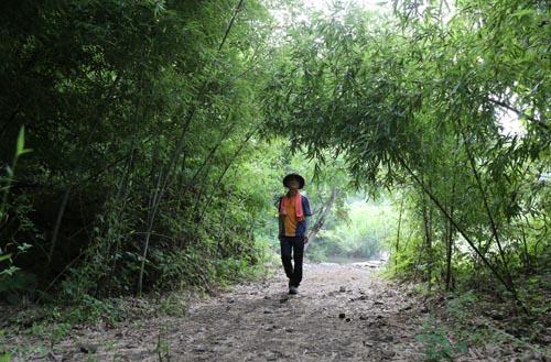 한재골 옛길에서 만난 대숲터널. 숲속에서 만나는 대숲이 더 청량하게 다가선다.