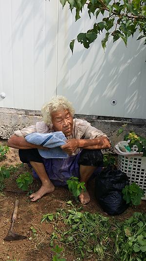 박부례 할머니는 강원 횡성군 공근면 오산리에서 토종마늘과 토종물고구마 농사를 짓고 계신다. 3년 전, 우리 지역에서는 사라졌다고 생각했던 수십 년 된 토종물고구마를 찾은 기쁨이 씨앗으로 나눠져 많은 사람들에게 전해졌었다.