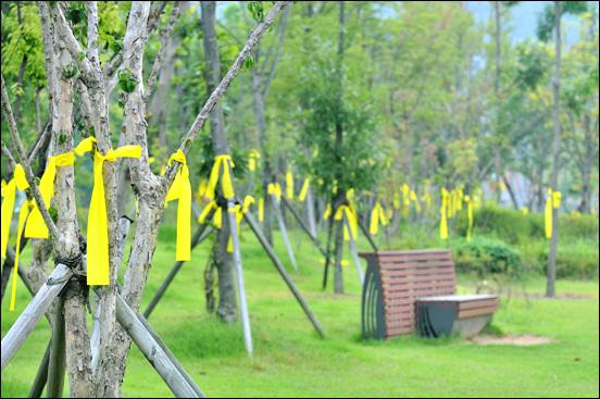 800km 십자가 순례단의 대전도착을 환영하기 위해 대전시민들이 묶은 노란리본이 진잠근린공원을 노랗게 물들였다.