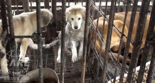 개들이 살고 있는 비위생적이고 학대적인 환경.