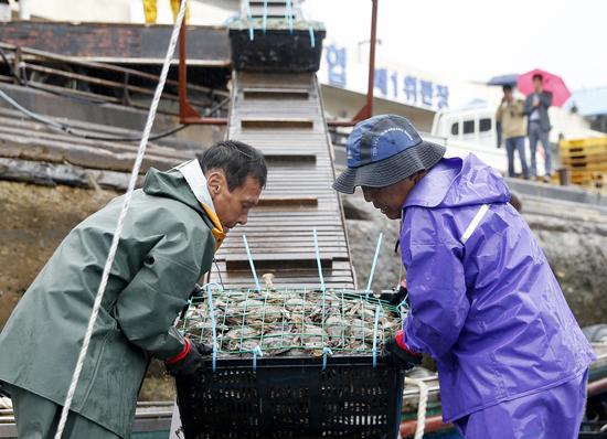 가을꽃게잡이에 나선 어민들이 신진항에 입항해 어선에서 패킹작업장으로 꽃게를 운반하고 있다.