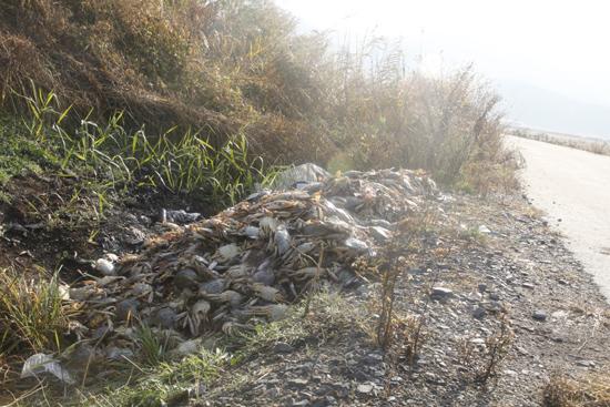 지난해 꽃게 투기 모습 지난해 가을 상품가치가 떨어진 꽃게를 인근 저수지에 투기한 모습. 올해도 불법 투기가 기승을 부리지 않을까 벌써부터 우려의 목소리가 나오고 있다.