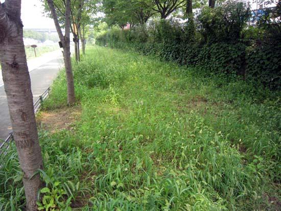 성내천 화단은 잡초밭으로.. 2014. 8월