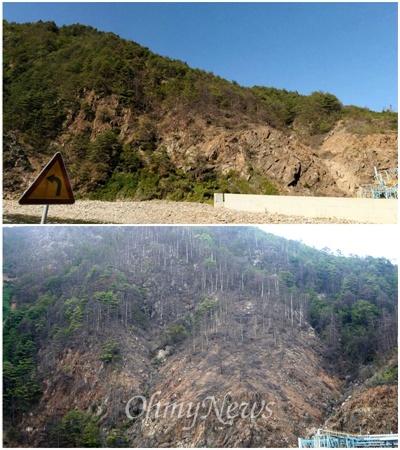 나무가 말라죽은 모습이 시간이 지날수록 늘어있다는 것을 2011년 찍은 다음 지도 '로드뷰'와 비교해보면 알 수 있다. 지난달 30일 찍은 사진은 죽은 나무의 범위가 훨씬 넓게 퍼져 있다.