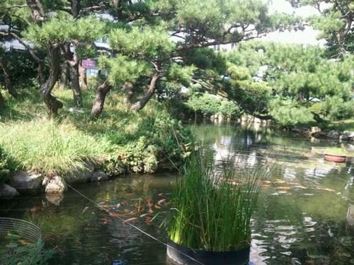 황금물고기가 노니는 연못