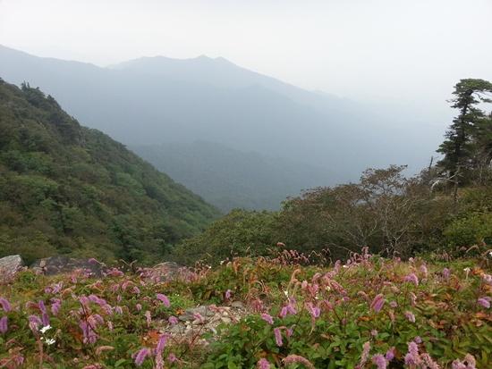 안개 안개가 또 산을 덮었습니다. 덕분에 아름다운 덕유산 풍경은 포기합니다.