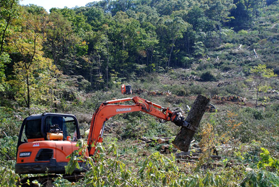중장비가 투입되어 벌목된 나무들을 정리하고 있다.