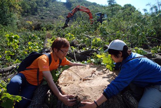 녹색연합 임대영·박표경 활동가가 양팔을 펼쳐야 안을 수 있을 정도로 거대한 94.2cm 가량의 나무가 벌목되었다.