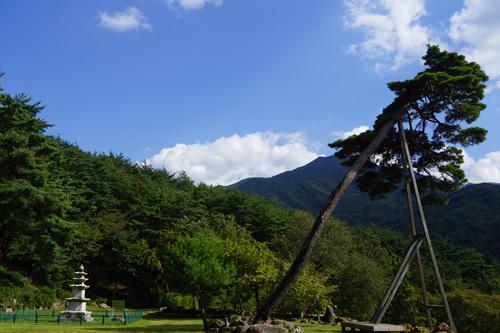벽송사 삼층석탑 나무  벽송사 삼층석탑 나무