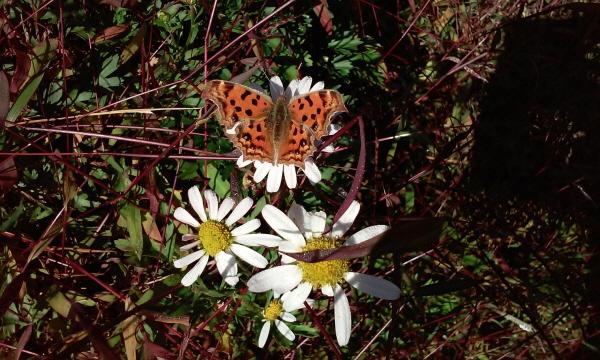 꽃과 나비 꽃향기에 취한 나비