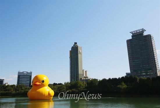 석천 호수에 등장한 '러버 덕' 14일 오후 서울 송파구 석촌호수에 네덜란드 예술가 플로렌타인의 작품 러버덕(Rubber Duck)'이 떠 있다. '러버덕'은 2007년 처음 등장했으며, 가로 16.5m, 세로 19.2m 높이 16.5m로 무게는 1톤으로 다음달 14일까지 전시 된다.