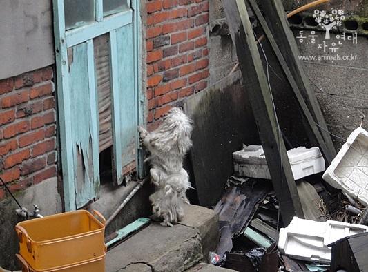 주인이 이사 간 빈집에 1년간 방치 된 말티즈 구조 직후 안타깝게도 질병으로 사망하였다.