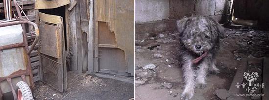 연탄창고에 갇혀 살던 강아지 어둡고 외로웠던 삶은 이 사진을 마지막으로 끝이 났다.