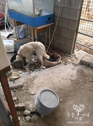 창고에 방치 된 마른 개 빈 그릇을 핥는 굶주린 개들의 일상