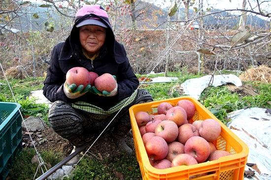 김족간 할머니 수확의 기쁨
