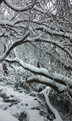 눈 덮인 겨울 숲 잎을 떨군 채 얼기설기 엉켜있는 나뭇가지 위로 눈이 쌓여 겨울의 깊이를 가늠할 수 없게 한다.