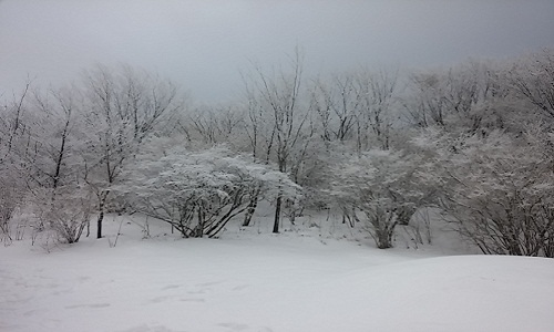 눈꽃나무 신선대 입구에 눈꽃을 피운 겨울나무들의 우아한 자태가 몽환적이다.