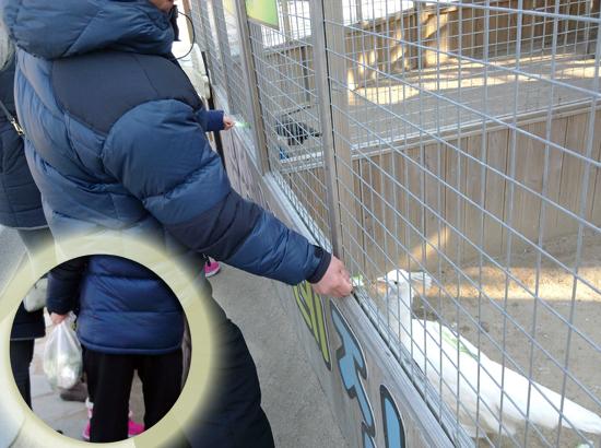 동물원 관리 직원이 양을 죽인 유력한 '범인'으로 지목한 남성.