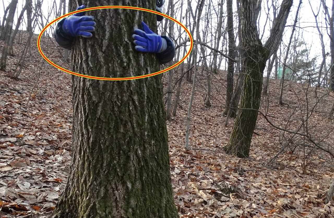성인이 두팔로 다 감쌀 수 없는 100살된 신갈나무가 잘려나갈 위기를 맞고 있습니다. 잘못된 산림파괴 이유를 살펴보겠습니다.