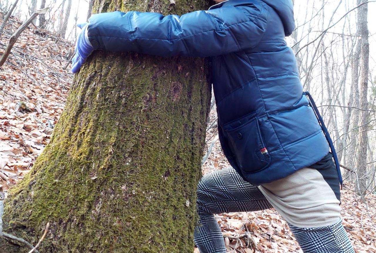 두 팔로 겨우 감쌀 수 있는 이 신갈나무는 적어도 80살 이상 되었습니다. 그런데 20살 미만의 7등급 이하라고요?