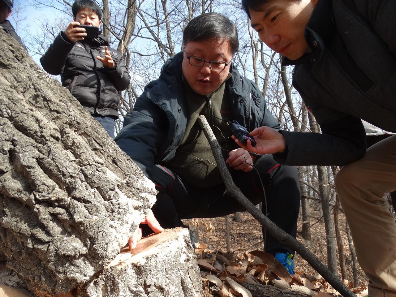 상지대학교 엄태원 교수가 현장을 방문하여 시공업체가 베어낸 굴참나무를 보며 35년이 넘은 나무라고 말합니다. 30~50살 된 참나무가 사는 이곳은 7등급이 아니라 공사가 불가능한 8등급이라고 힘주어 강조했습니다.