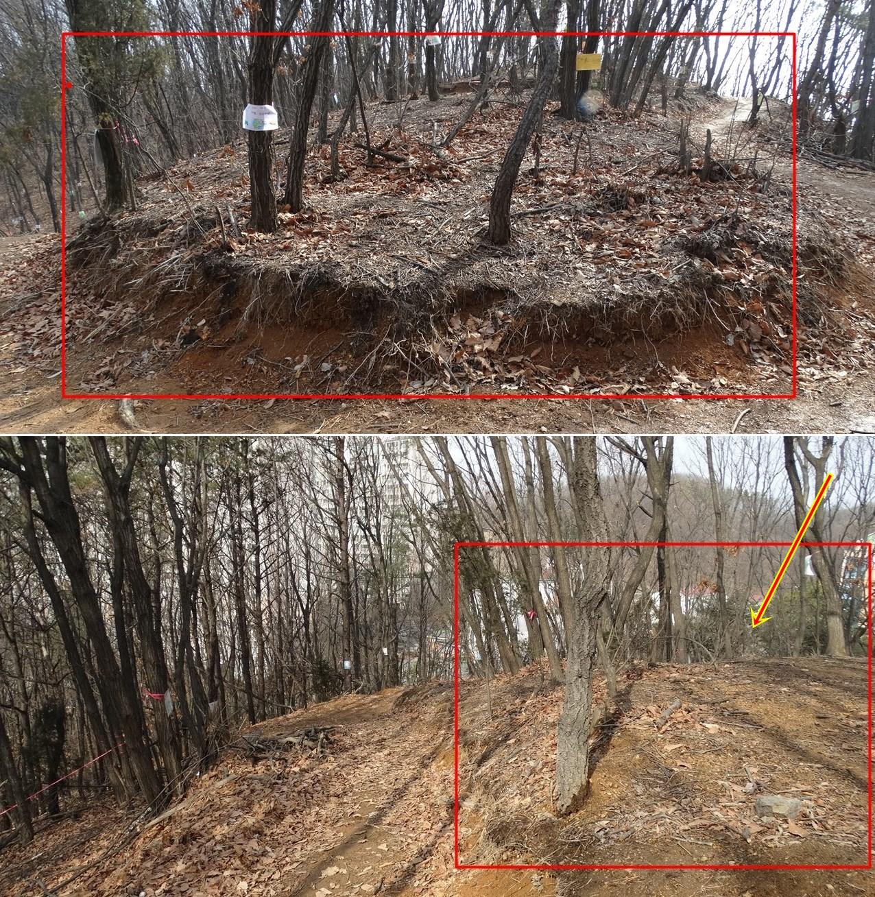 사진의 빨간표 한 자리가 한강청 전문가가 단 5분 동안 나무 지름을 조사한 곳이다. 주민들이 등산로로 이용하던 곳이라 다른 곳에 비해 나무가 적음이 사진 속에서도 나타난다. S사가 지난 가을 포클레인으로 파헤친 자리를 한 귀퉁이만을 조사하고 7등급이라고 판정했다. 그러나 아래 사진에서 보듯, 한강청이 조사한 빨간표 안은 나무가 텅 비워 있으나, 좌측 엔 나무들의 밀도가 높음을 알 수 있다.