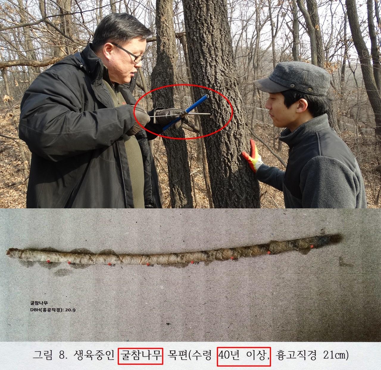 엄태원 교수는 정확한 녹지자연도 등급 조사를 위해 생장추를 통해 이 숲의 가장 표준적인 굵기의 나무의 나이테까지 정확히 조사했다. 생장추를 통한 나이테 조사에서도 21cm에 불과한 굴참나무가 40년이 넘었음을 확인했다.