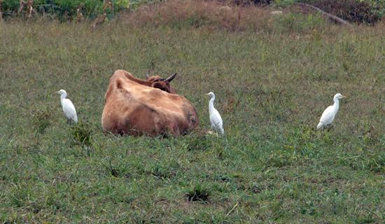 새들은 태생적 내비게이션을 가지고 있다고 합니다.