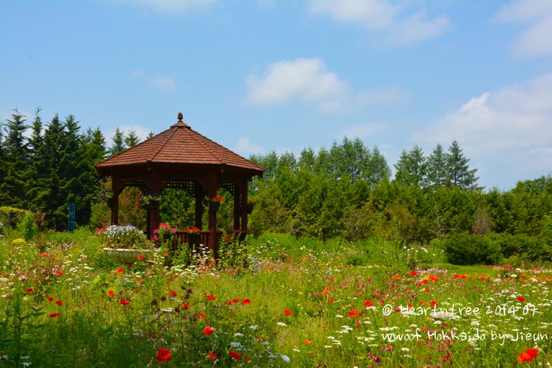 양귀비 꽃이 여기저기 예쁘게 피어있는 정원 모습