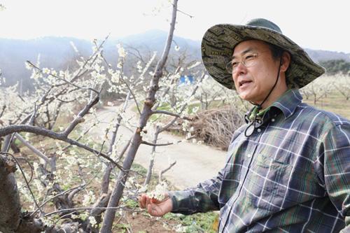 매화밭에 선 귀농인 반승환 씨. 마을에서 멀리 떨어진 산중에서 매실 농사를 지으며 살고 있다.